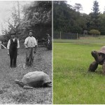 A Seychelles Giant Tortoise Named Jonathan Is the Oldest Known Living Land Dwelling Animal in the World