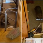 Busy Baby Beaver Builds Dam Inside Rescuer's House Using an Amusing Variety of Household Objects