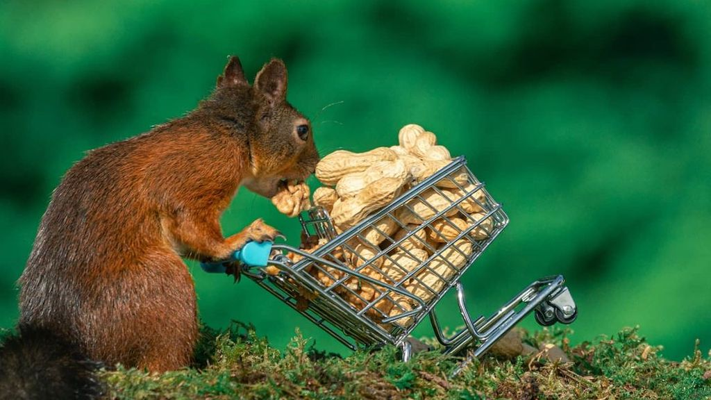 Rwandan Genocide Survivor Finds Peace in Taking Humorous Photos of Squirrels and Other Small Wildlife