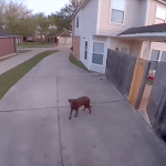Man Tells His Escaped Dog to Get Back in the House Using the Intercom Feature of His Video Doorbell