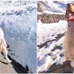 A Confident Three Legged Dog in Colorado Walks Upright on His Hind Legs Like a Human