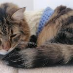 Kind Human Crochets Sweaters to Calm an Anxious Cat