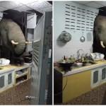 Hungry Elephant Crashes Through a Kitchen Wall in Thailand While Searching For Salty Snacks