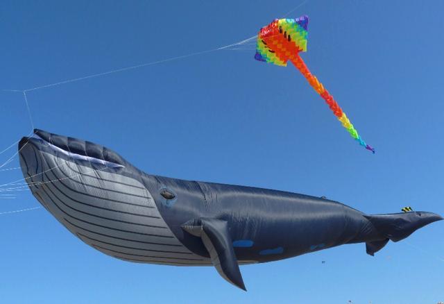 Image result for kite