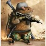 rats taken over aso rock