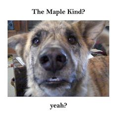 Maple Kind Talking Dog