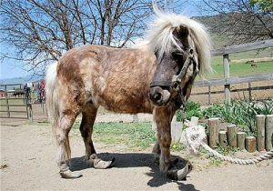horse with shoes