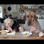 Two Dogs Dining