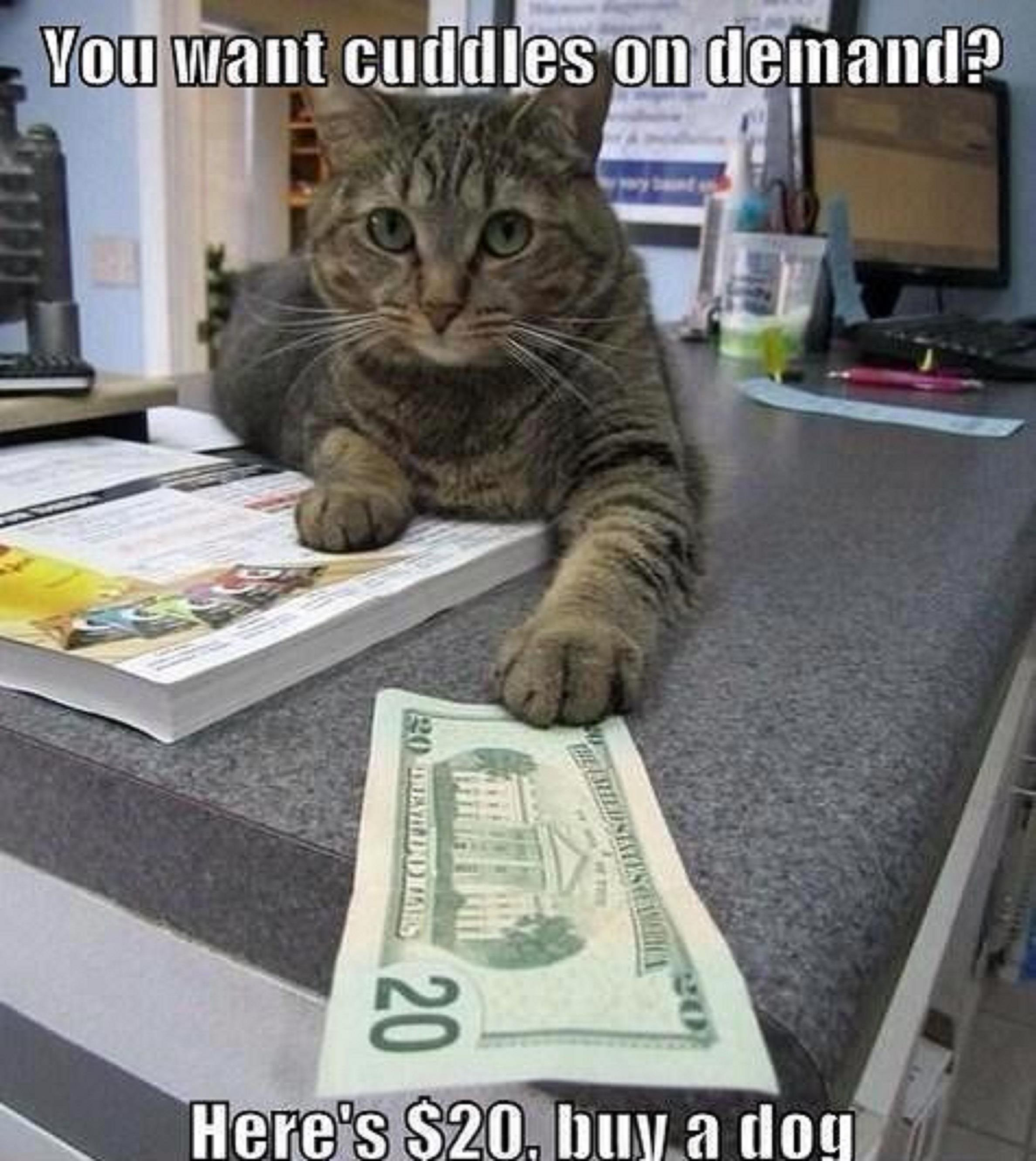You Want Cuddles On Demand? Funny Cat Memes