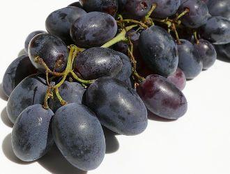 Taninos del vino en la uva