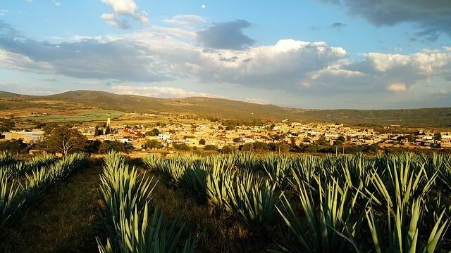 mexico agave tequila