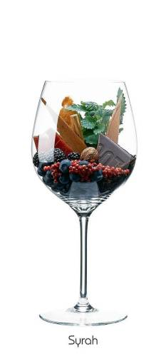 Syrah cepa vino tinto