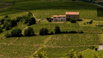 Vinos de Beaujolais
