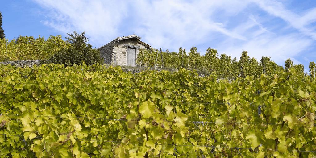 Côtes-du-Rhône vinos