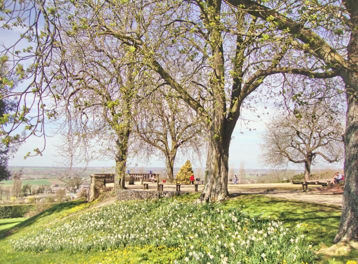 Daffodil slopes