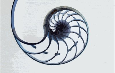 Nautilus-white-background