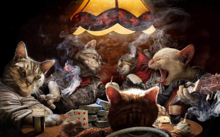 Cats gonna play….