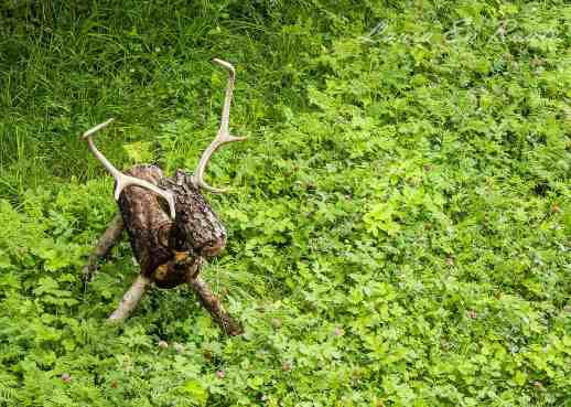 One of the deer figures on the grounds