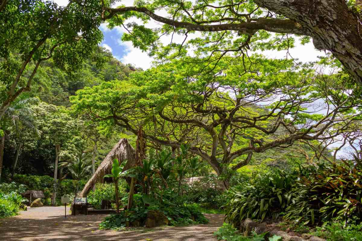 Visit Waimea Valley Botanical Garden, Oahu