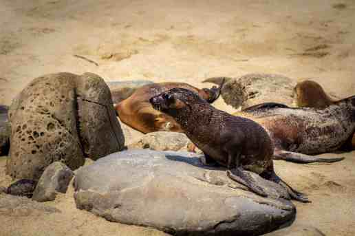 La Jolla Cove - San Diego: Not Your Typical 4 Day Itinerary - www.lauraenroute.com