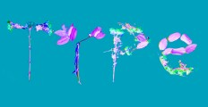 flower blue type