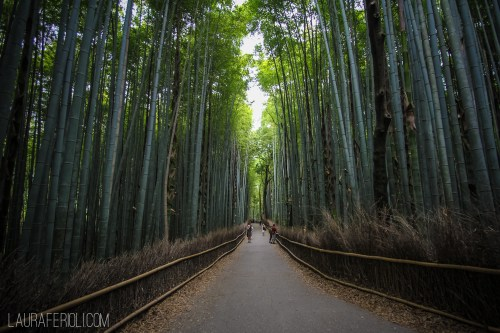 Arashiyama (Bamboo Forest), Kyoto
