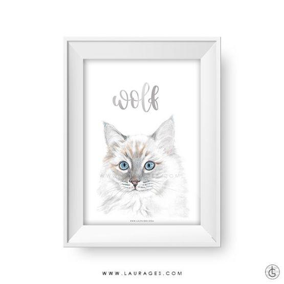 lamina gato