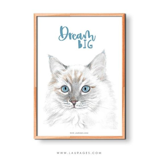 lamina dibujo gato