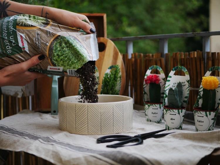 DIY Kaktus Terrarium
