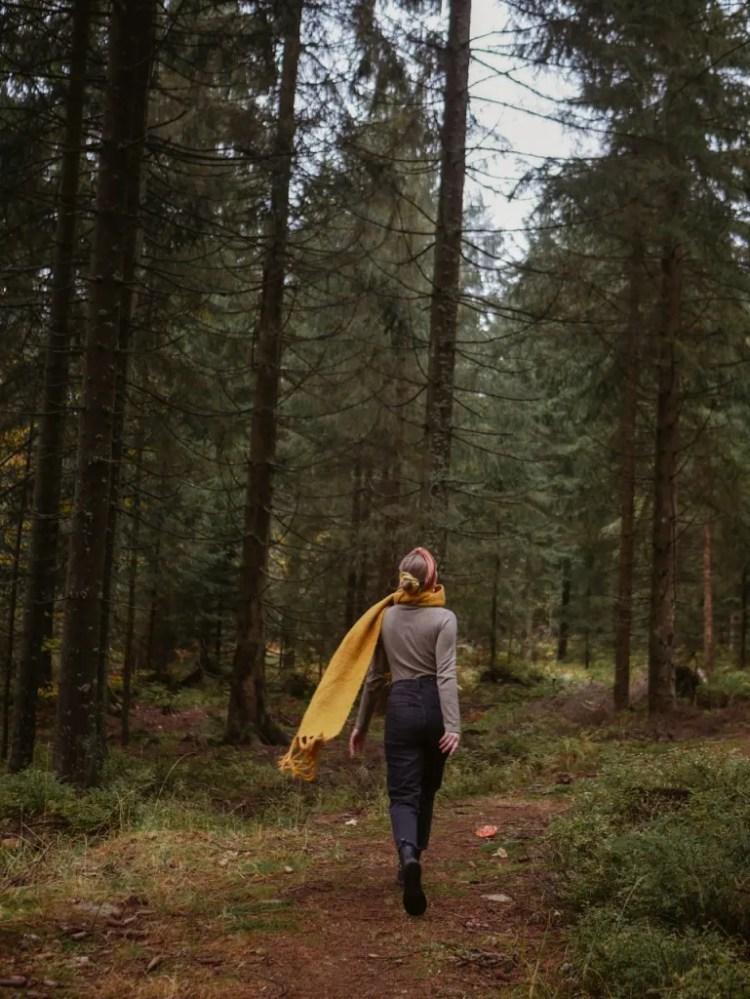 Den Wald erkunden