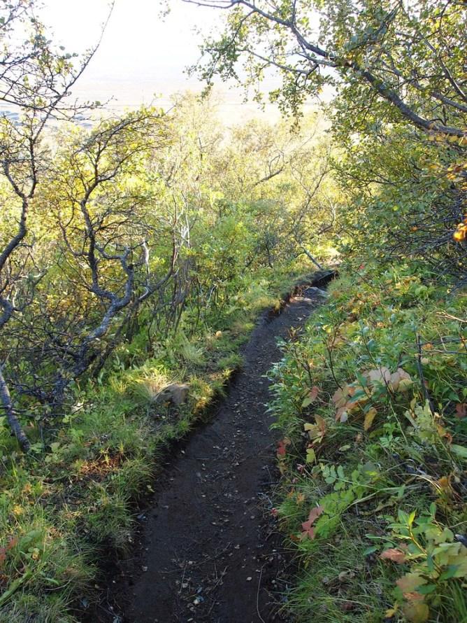 Skaftafell-Nationalpark: Wald! Bäume! Woa!!!