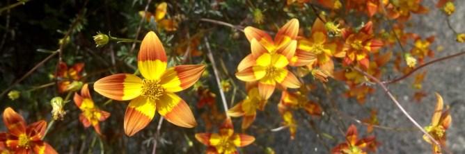 Ich bin generell von den vielen Blumen begeistert, die durften auch noch so wundervoll! Hier ein besonders schönes Exemplar