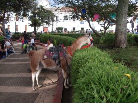 Ein Lama frisst den Busch