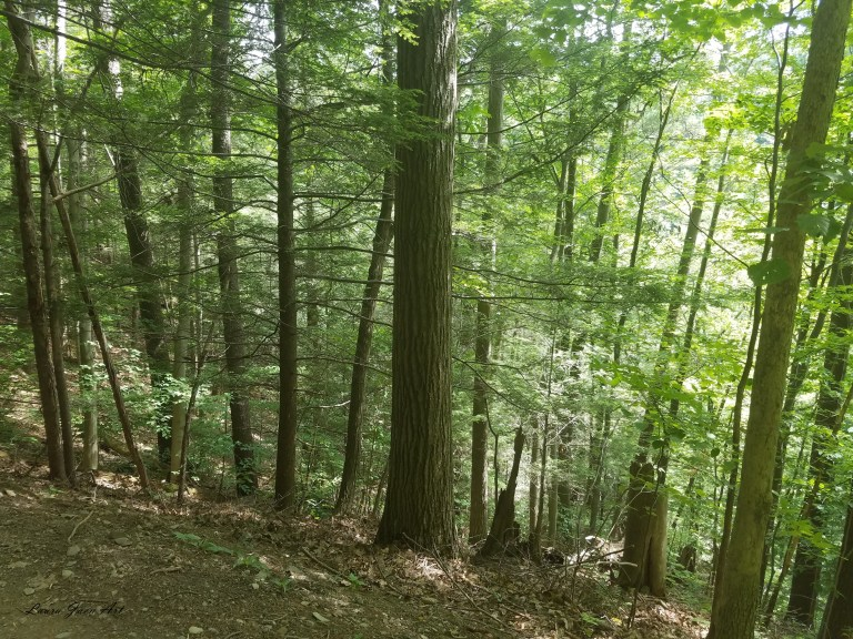 Photo of woods Robert H. Treman State Park in Ithaca NY by Laura Jaen Smith.