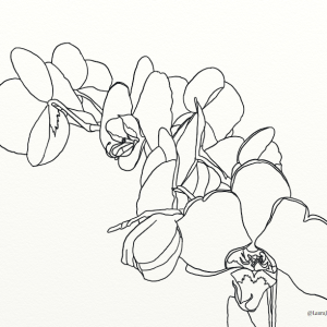 Orchids outline coloring page by Laura Jaen Smith