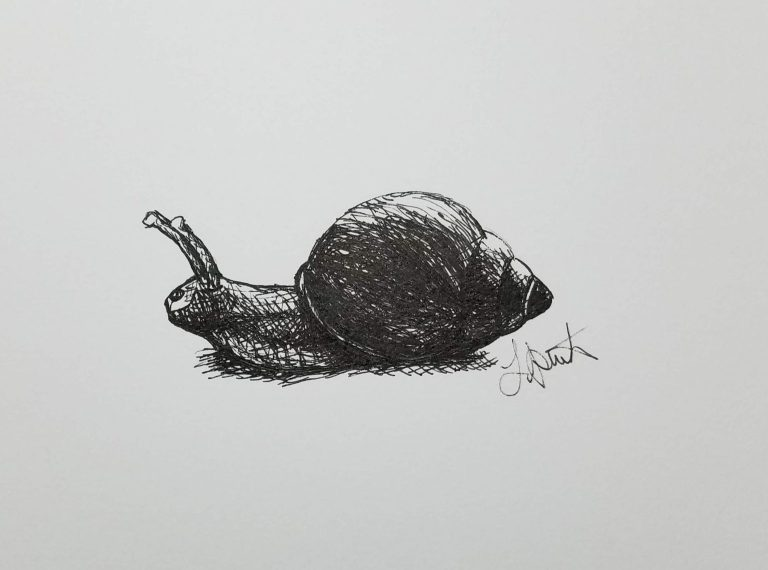 Snail by Laura Jaen Smith. Black and white ink drawing of snail.
