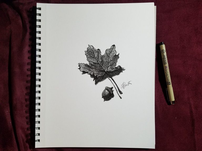 Sketchbook view with pen of Autumn Leaf by Laura Jaen Smith. Black and white ink drawing of maple leaf and acorn.