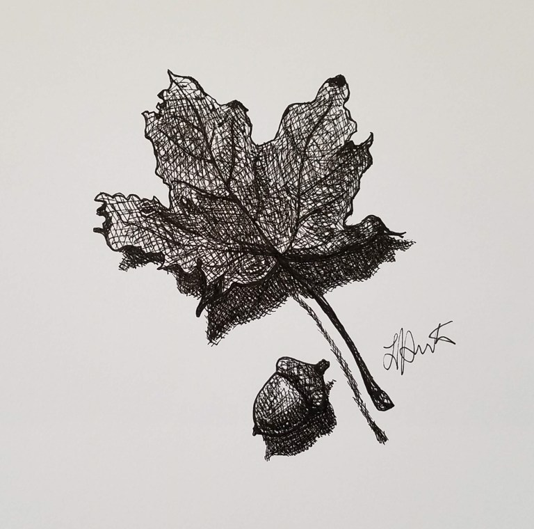 Autumn Leaf by Laura Jaen Smith. Black and white ink drawing of a maple leaf and acorn.