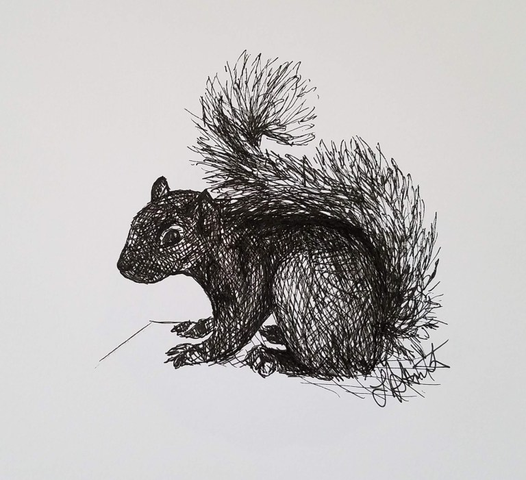 Squirrel by Laura Jaen Smith. Ink drawing of squirrel bent over with tail up over its back