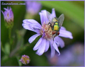 A Flower and a Fly