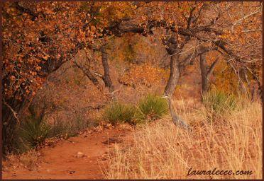 Heron under tree arch