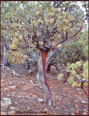 The bleeding bush