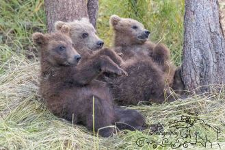 Katmai National Park July 11 2016 (29 of 30) EDIT WATERMARK