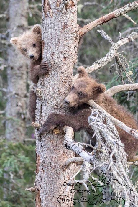 Katmai National Park July 14 2016 (2 of 1) WATERMARK