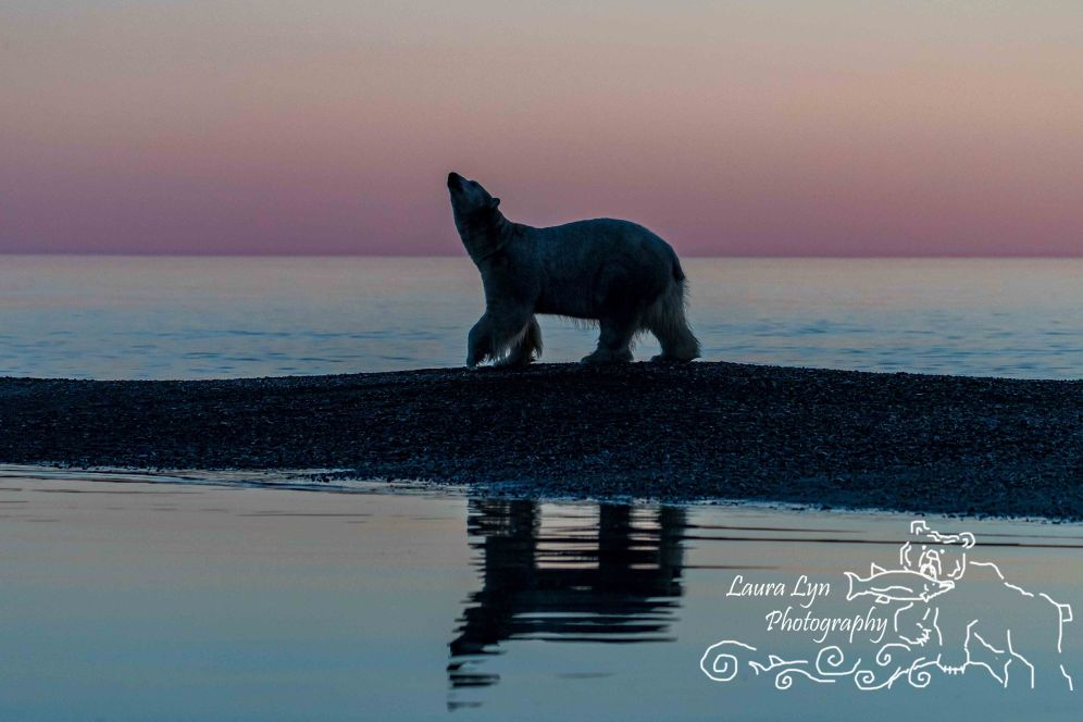 polar-bears-september-22-2016-9-of-40-watermark-blog