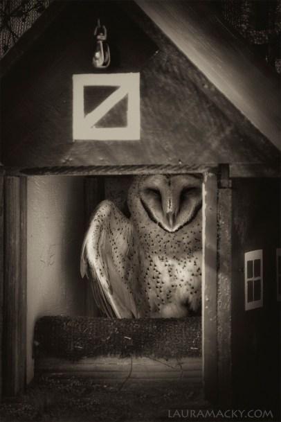 owlbw-web