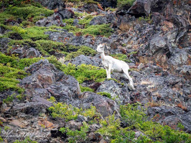 Alaska2019-2.jpg