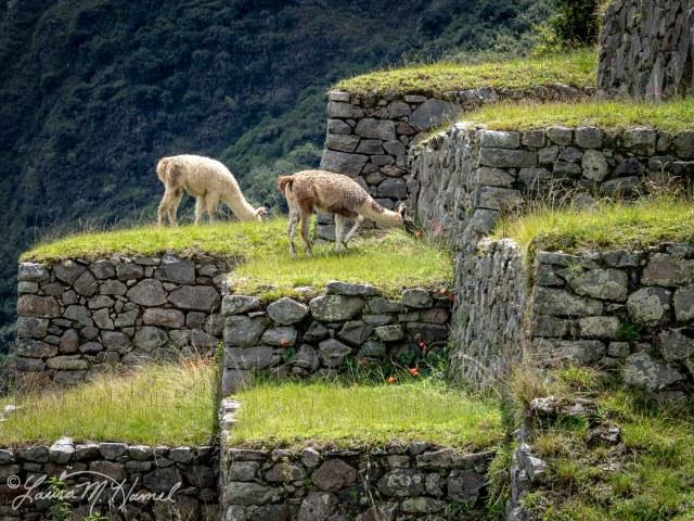 Peru201819-174.jpg
