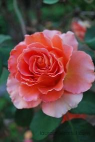 15cali flowers