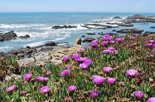 2cali coast